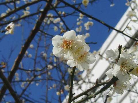 春のイメージ写真 僕の見た秩序 フリーフォトより
